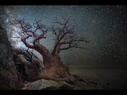 Baobab starlight